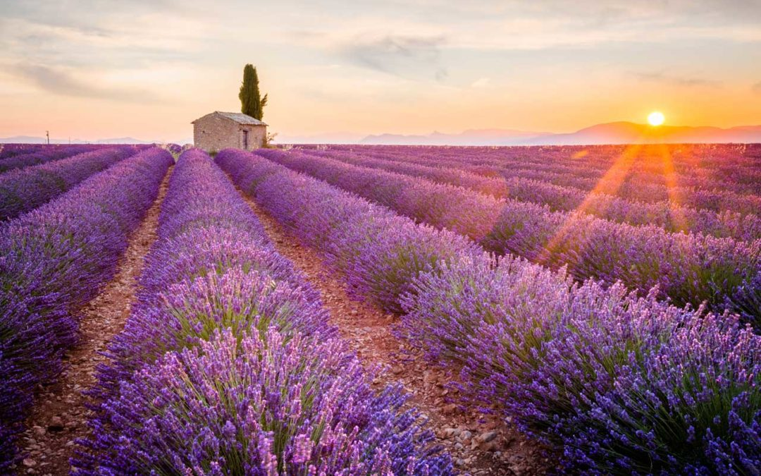 Bus tours in France: the Provence itinerary and Valensole